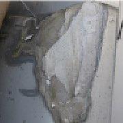 凍害による瓦のかけ01
